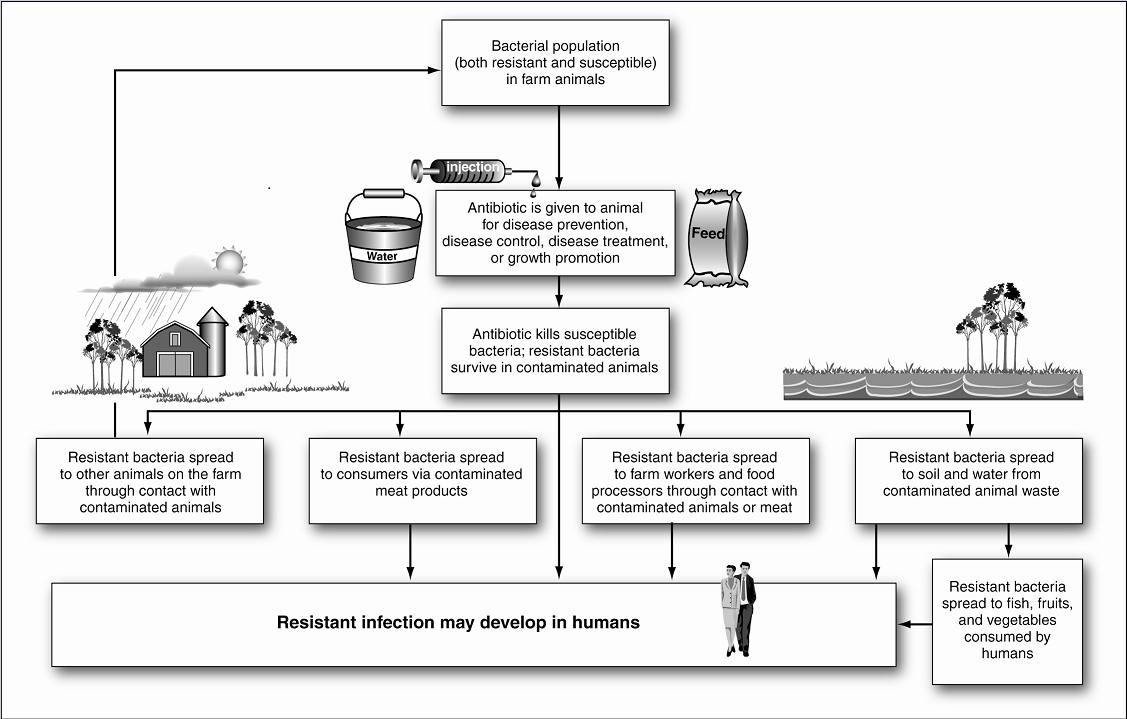 article foodborne illness