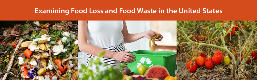 Examining Food Loss and Food Waste in the United States