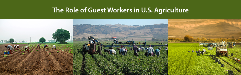 The Role of Guest Workers in U.S. Agriculture